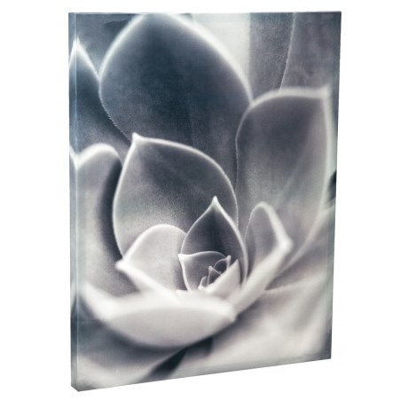 Image of 22x28? Florison #25 Botanical Flower Close-Up Wall Art