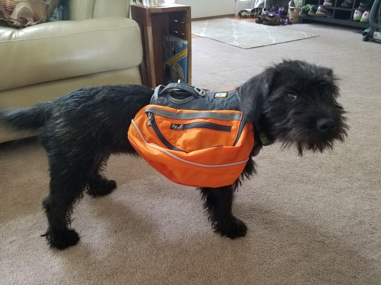 Ruffwear Approach Dog Pack - Save 37%
