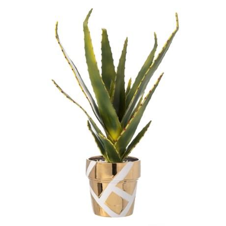 Image of Aloe Plant in a Metallic Pot - 20?