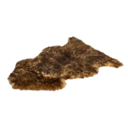 Auskin Sheepskin Single Pelt Pet Rug in Walnut