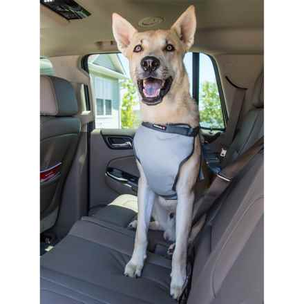 Avalanche Pet Safety Car Harness in Grey/Charcoal - Closeouts