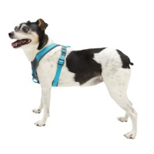 Avalanche Reflective Padded Dog Harness in Blue - Closeouts