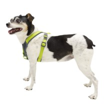 Avalanche Reflective Padded Dog Harness in Green - Closeouts
