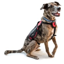 Avalanche Thermal Dog Harness Vest in Red - Closeouts