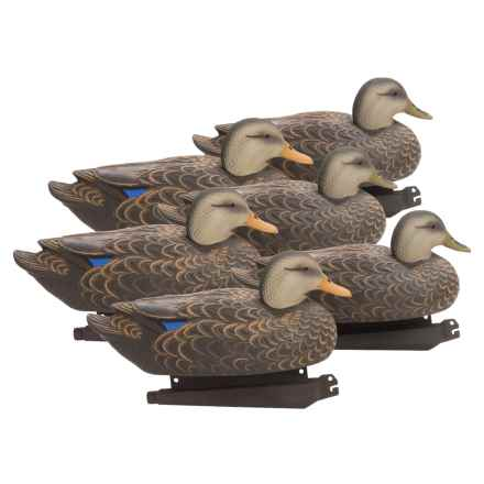 Banded Black Duck Floating Decoys - 6-Pack in See Photo - Closeouts