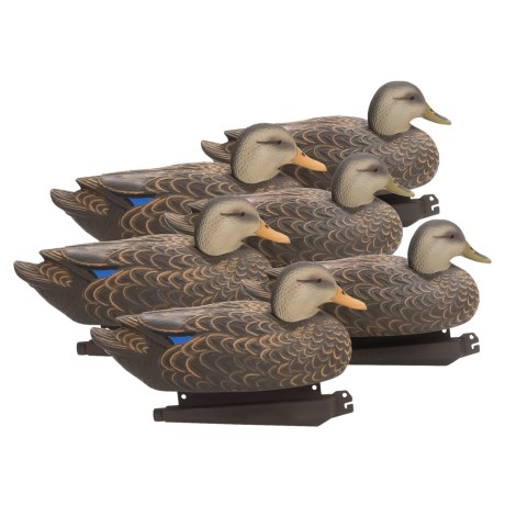 Banded Black Duck Floating Decoys 6 Pack