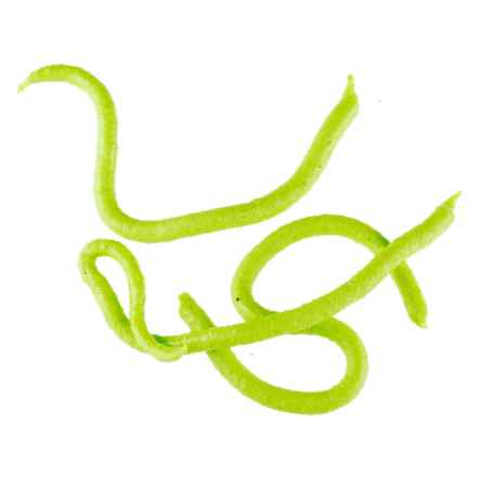 Berkley Gulp! Earthworm in Chartreuse - Closeouts