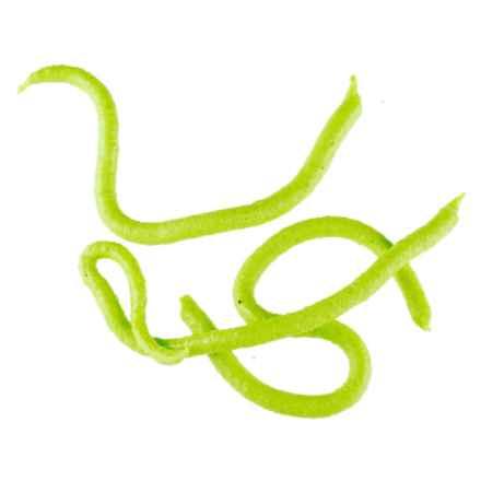 Berkley Gulp! Earthworm in Chartreuse - Closeouts