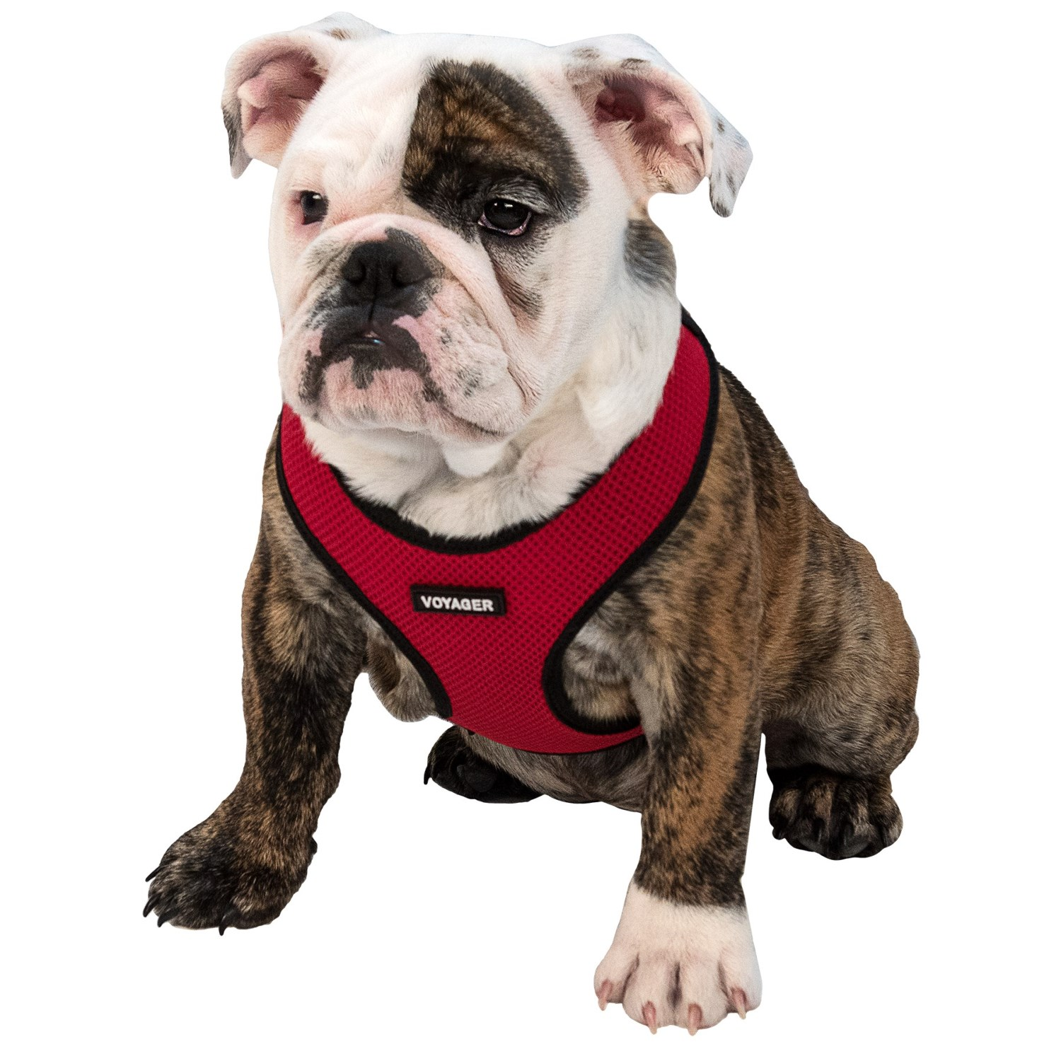 Step In Dog Harness Review