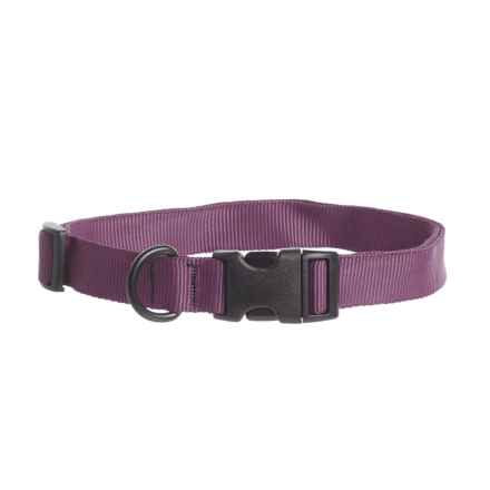 Bison Designs Dog Collar in Plum - Closeouts