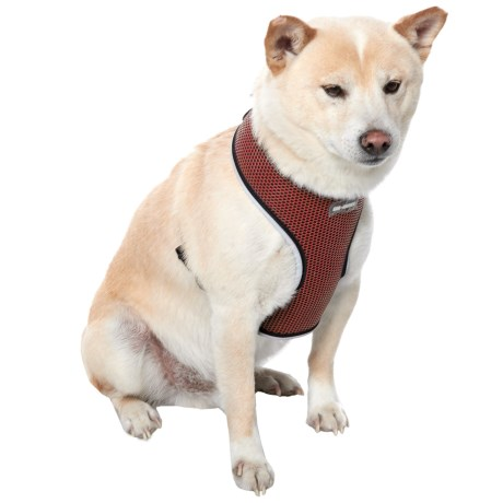 Car and Driver Reflective Dog Harness in Red