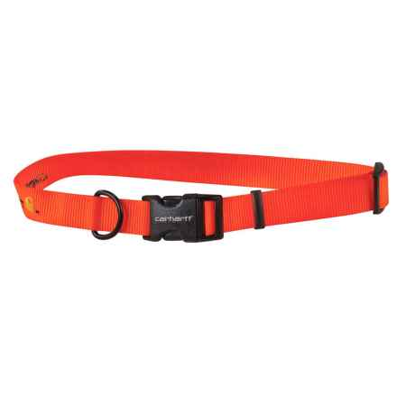 Carhartt Tradesman Dog Collar in Brite Orange - Closeouts