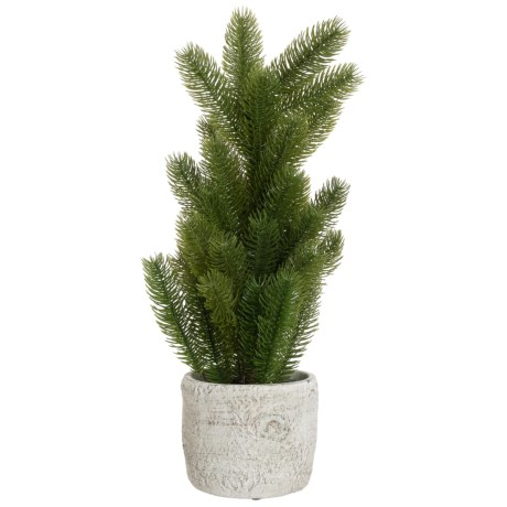 Image of Christmas Pine in Pot - 21?