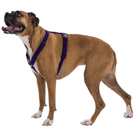 "Dog Gone Smart Wear Dog Harness - 1"" in Nano Suede Purple"