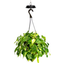 Echo Valley Hanging Plant Illuminator in See Photo - Closeouts