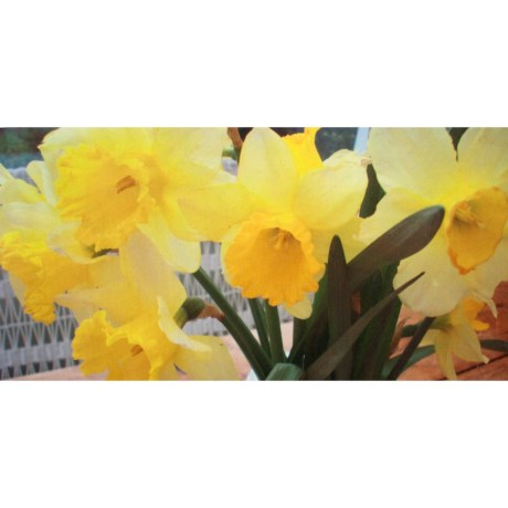 "Entryways Image Collection Padded Entry/Kitchen Mat - 20x40"" in Daffodils"
