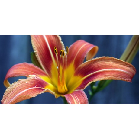 """Entryways Image Collection Padded Entry/Kitchen Mat - 20x40"""" in Daylily"""