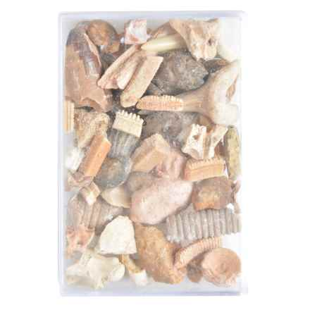 Esschert Design Fossils in a Box Collection in See Photo - Closeouts
