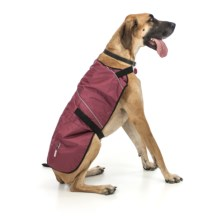 Ezydog Field Coat - 2XL in Burgundy - Closeouts