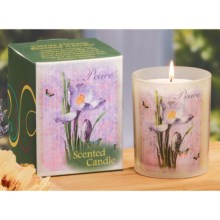 "Gail Marie ""Citrus Dream"" Scented Candle - 8 oz. in Peace - Closeouts"