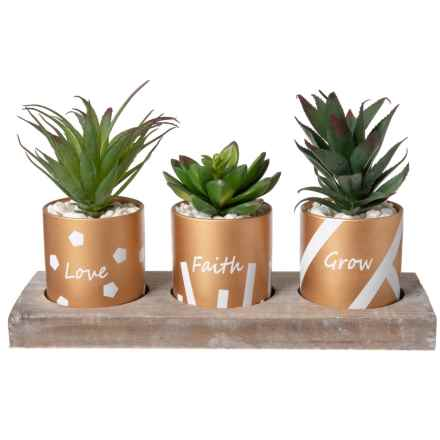 """Gardener's Eden Potted Succulents in Wood Tray - Set of 3, 31x11.5x20"""" in Gold/White - Closeouts"""