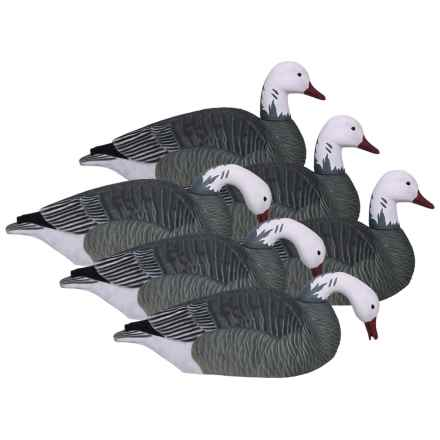 Hardcore Pro-Series Blue Goose Shell Touchdown Decoys - 6-Pack in See Photo - Closeouts