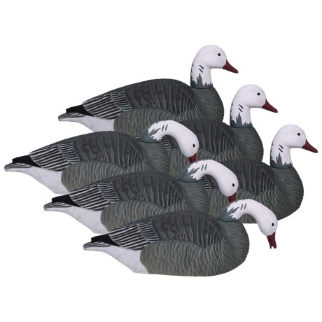 Hardcore Pro-Series Blue Goose Shell Touchdown Decoys - 6-Pack in See Photo