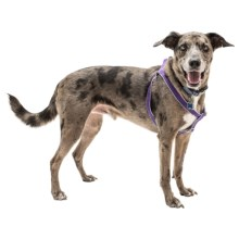 Harry Barker Eton Step-In Dog Harness - Recycled PET in Chelsea Purple/Lavender - Closeouts
