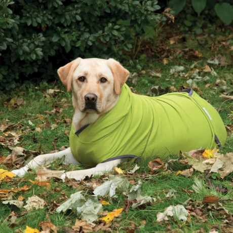 Insect Shield ® Premium Dog Hoodie in Green