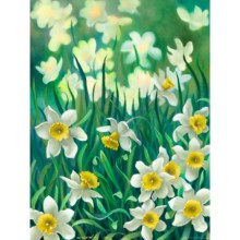 Jonquils by Ron Richardson in Jonquils - Closeouts