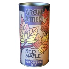 Jonsteen Company Grow a Tree Seed Kit in Red Maple - Overstock