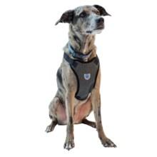 Mega Pet Car Seat Dog Harness in Black - Closeouts