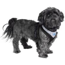 Mega Pet Dog Harness in Black - Closeouts