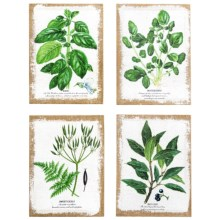 Napa Home & Garden Botany II Prints - Set of 4 in See Photo - Closeouts