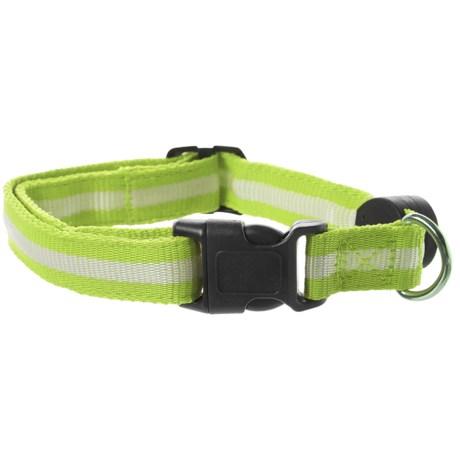 NITE BEAMS LED Dog Collar - Small in Green/Black