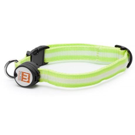Nitebeams LED Dog Collar - Extra-Large in Green/Black