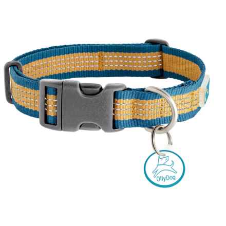 OllyDog MTN Reflective Dog Collar in Blue Amber - Closeouts