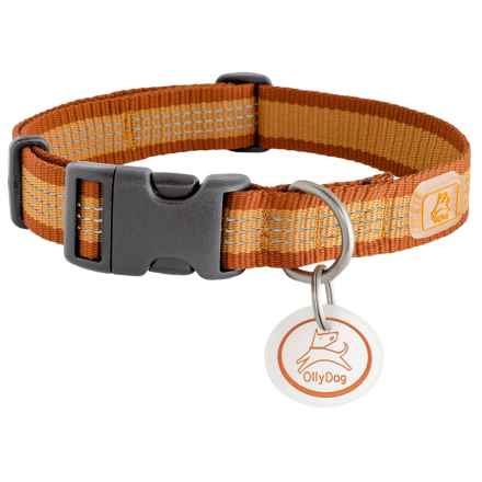 OllyDog MTN Reflective Dog Collar in Mango - Closeouts