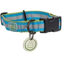 Ollydog Night Life Reflective Dog Collar in Olive/Turquoise - Closeouts