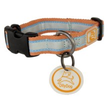 OllyDog Nightlife 2 Dog Collar - Large in Orange/Light Blue - Closeouts