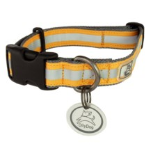 OllyDog Nightlife 2 Dog Collar - Medium in Grey/Orange - Closeouts