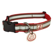 OllyDog Nightlife 2 Dog Collar - Medium in Red/Brown - Closeouts