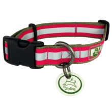 OllyDog Nightlife 2 Dog Collar - Medium in Sage/Fuchsia - Closeouts