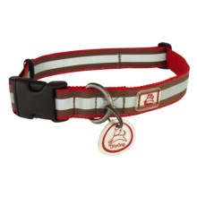 OllyDog Nightlife 2 Dog Collar - Small in Red/Brown - Closeouts