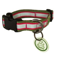 OllyDog Nightlife 2 Dog Collar - Small in Sage/Fuchsia - Closeouts