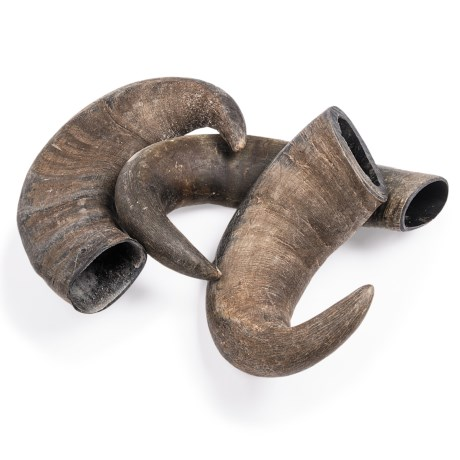 Outback Jack Large Bully Horn Chews 3 Pack