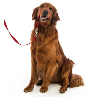Premier Pet Eco Gentle Leader - Large, 6' Leash Included in Sedona Red