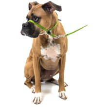Premier Pet Eco Gentle Leader - Medium, 6' Leash Included in Fern Green - Closeouts