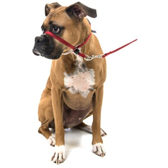 Premier Pet Eco Gentle Leader - Medium, 6' Leash Included in Sedona Red