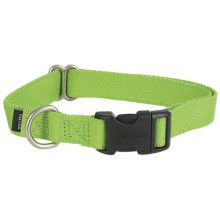 Premier Pet Quick-Snap Eco Dog Collar - Medium, Recycled Materials in Fern Green - Closeouts